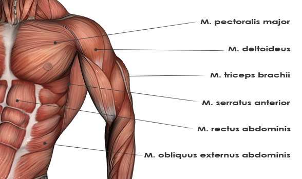 the yoga rope, Muscles